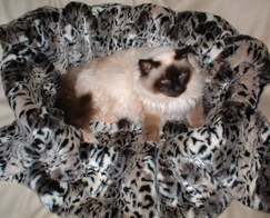 Faux Fur Pet Beds and Blankets