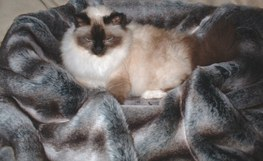 Grey Chinchilla Faux Fur Pet Blanket