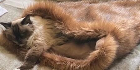 Pet Snuggle Sac