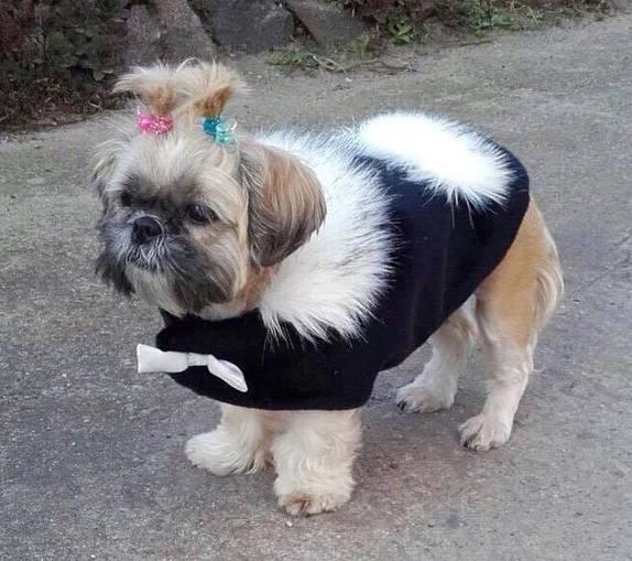 Black Moleskin and Alaska Faux Fur Dog Coat