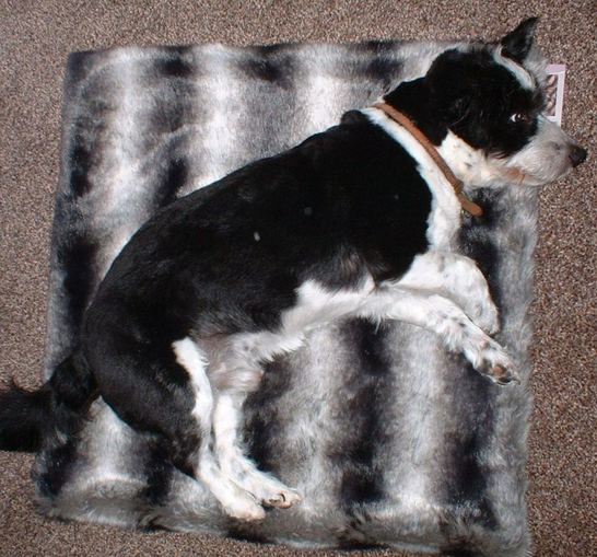 Chinchilla Faux Fur Pet Blankets