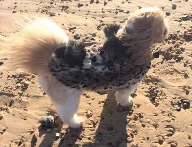Wild Cat and Black Bear Faux Fur Dog Coat