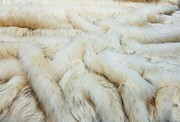 SALE Tissavel Himalaya Faux Fur Throw with Cream Velboa