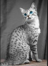 Egyptian Mau Faux Fur Fabric
